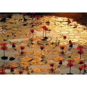 Baumann   Lotus Pond Canvas: Home & Kitchen