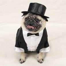 extra small small Dog Pet Tuxedo Coat Jacket