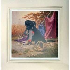 Jim Lamb German Shepherd Puppy Sock Hanging Print