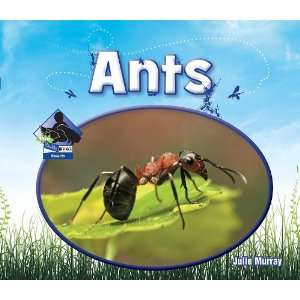 Ants (Big Buddy Books Insects)