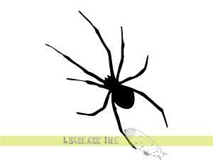 Creepy Spider Vinyl Decal Sticker for Car & Home Horror